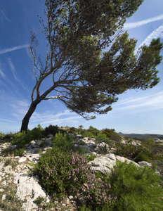 parc naturel du Llevant
