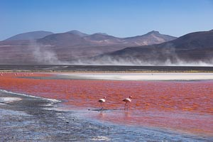 Bolivie laguna colorada
