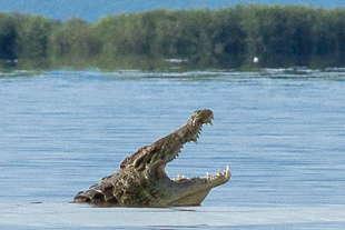 lac Chamo