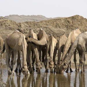 caravane sel ethiopie