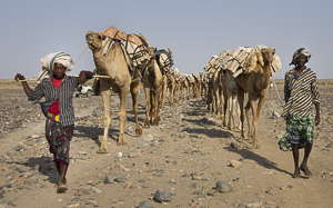 Ethiopie caravane de sel