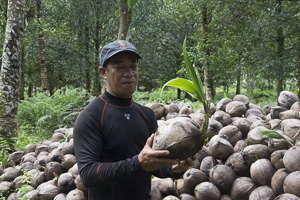 exploitation noix coco