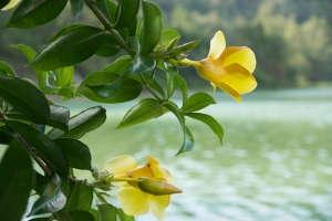 Tomohon lac Linau