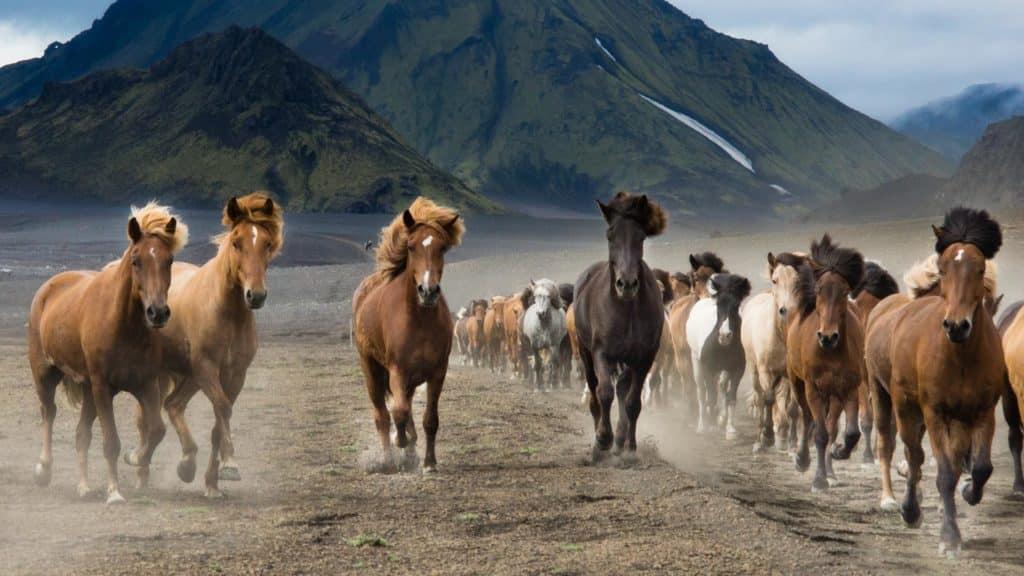 blog trek Islande