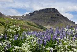 Reykjavik mont Esja