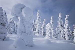 Finlande arbre givré