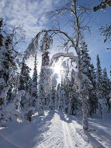 Finlande forêt hiver