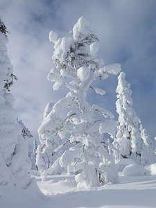 Laponie hiver neige