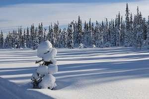 Laponie paysage hiver