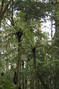 Andringitra forêt primaire