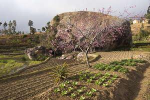 jardin betsileo