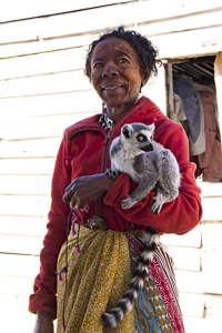 lemur domestique