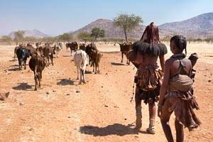 himba troupeau
