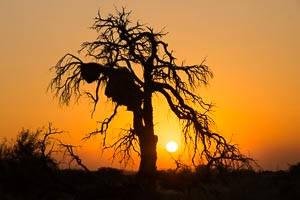 Namib desert camp