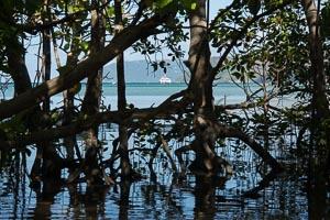 Seychelles Curieuse mangrove