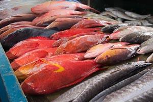 Victoria marché aux poissons